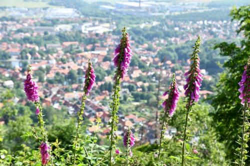 Ilsenburg